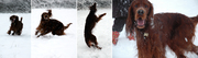 The Four Sacred Stages of a Snowball Fight