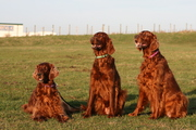 My dogs - Jolly, Blossom and Zinzi