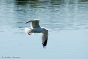 Bird_0149