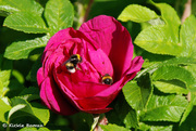 FlowerAndBees_0043
