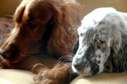 Riley and Amos