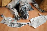Dog Training Secrets Revea...