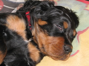 Sleeping puppy <3