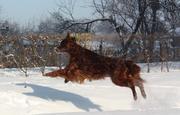 again jumping