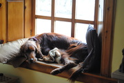 Logan on the window sill