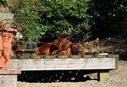 bronte enjoying the sun