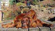 bronte in the sun
