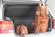Please, can we go with you?