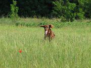 poppy field june 2011