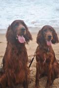 Fiddich and Jamie on the beach