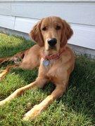 Doug relaxing in backyard