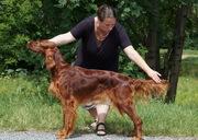 Glory Field´s I am Ivy - 23 month winning CACA, Res.CACIB at CACIB Oberwar