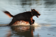 Ari walking on water.......