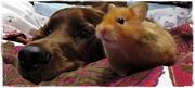 Sheena & Basil , the hamster :)