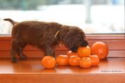 orange girl with mandarins, 4 weeks