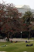 Tel Aviv - University