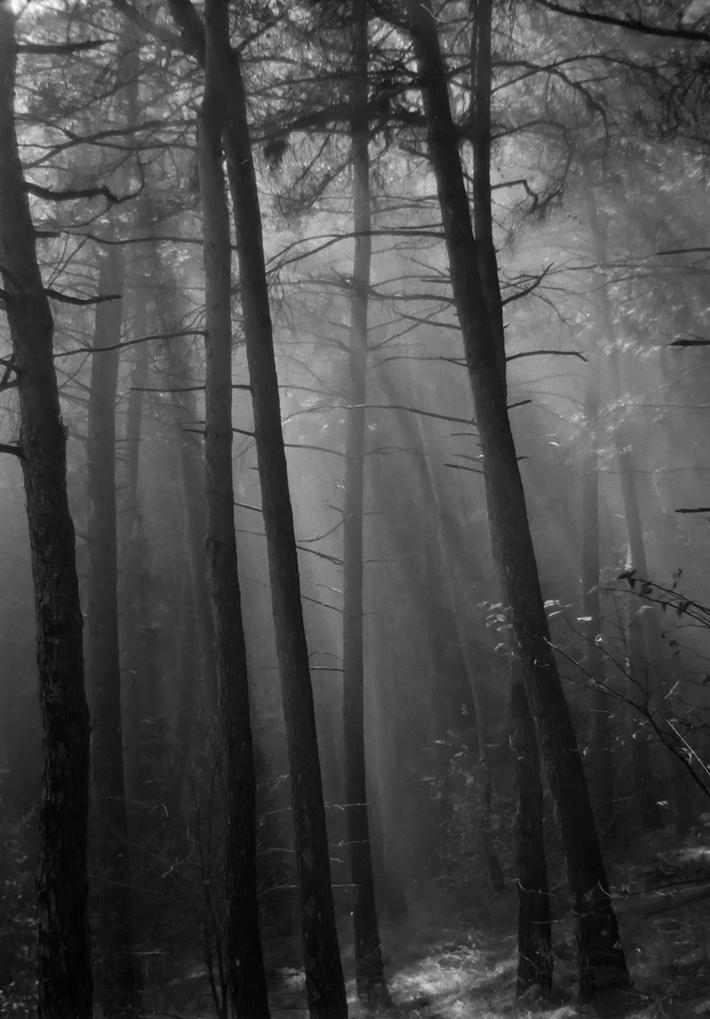 Στο δάσος με ομίχλη(Αναλογική)