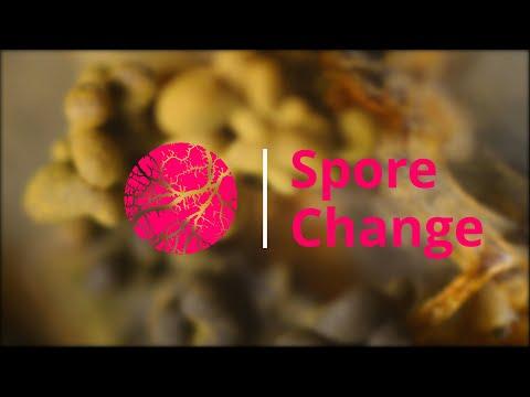 Spore Change | Physarum Polycephalum