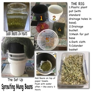 Rig for Sprouting Mung Beans