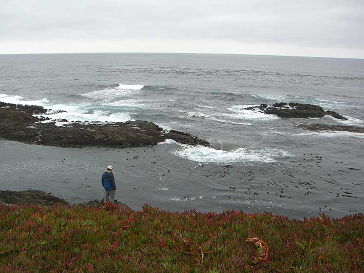 The-Pacific-from-the-Mendocino-Coast