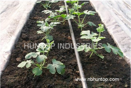 water melon drip watering irrigation system