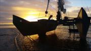 Laingholm Bay