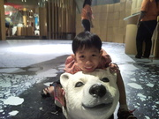 Ride polar bear2