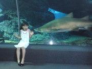 แย่แล้ว ฉลามจะกินหนู