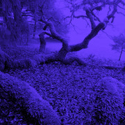 Blue Dreaming Moon