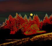 Dreaming Tree Moon