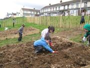Rosemount - Planting