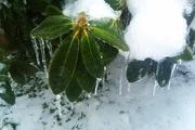 Ice Storm 004