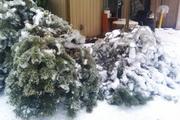 Ice Storm 006