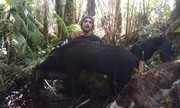 Fat sow down ......Alryte run um down haad and two small sows