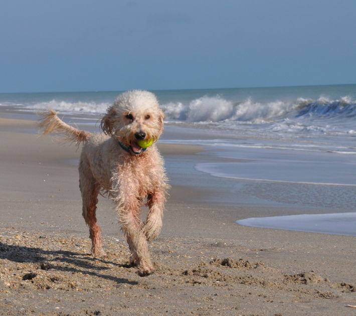 Marlow running on the beach