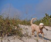 Marlow on the beach