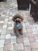 Sloan newly groomed