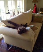 Comfy now?