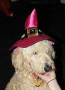 Halloween hat (7)