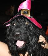 Halloween hat (4)