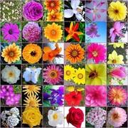 flores-de-bach