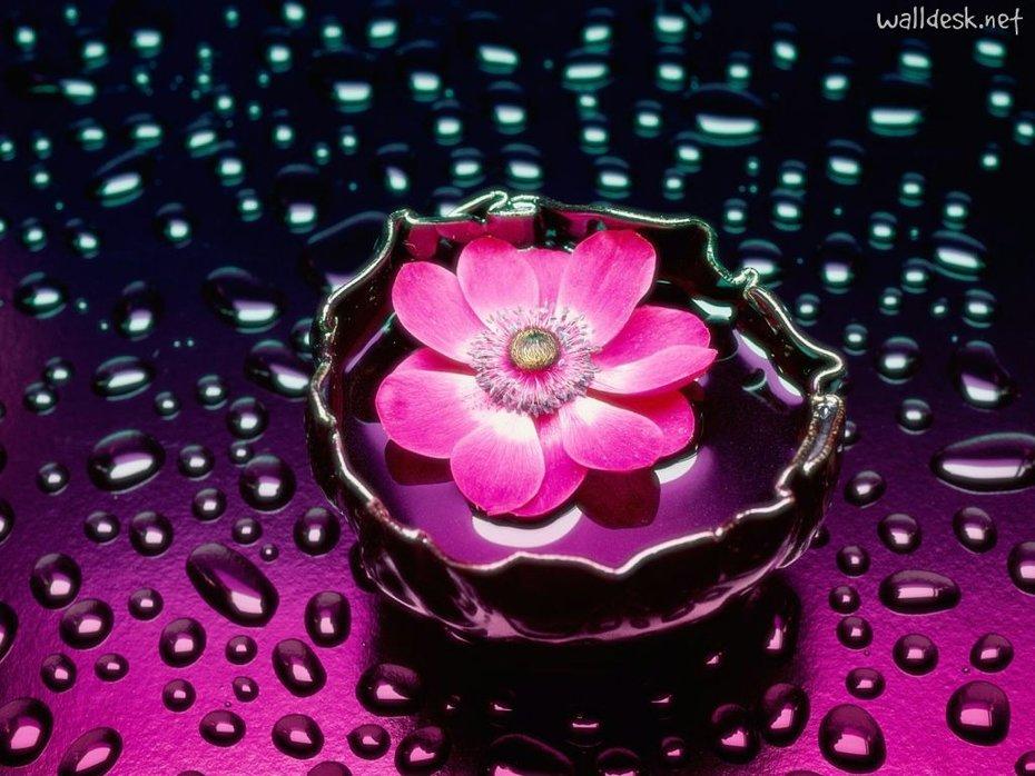 Petals-and-Water