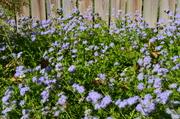 Butterfly garden 2011