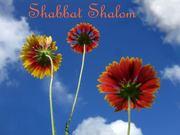 ShabbatShalomFlowers