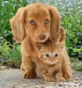 Dois amigos