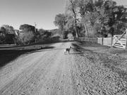 2016 Vee Bar Literature & Landscape of the Horse Retreat
