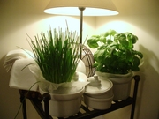 The mini herb garden
