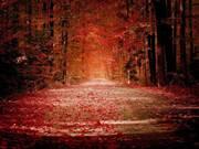otoñocaminoImagen1