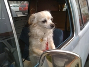 Doggie in a Bus