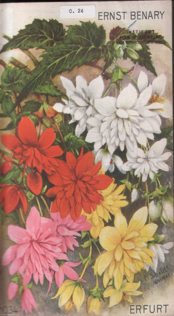 Ernst Benary nursery catalogue